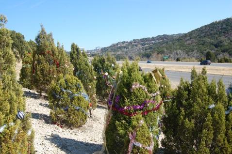 Trees on 360 055