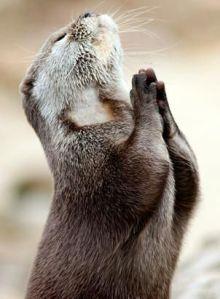 http://abcnews.go.com/Technology/slideshow/photos-amazing-animals-8537483