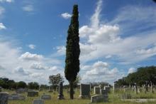 Cemetery 009