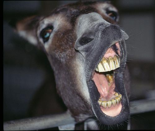 http://maiweirdstuff.blogspot.com/2011/09/donkey-somewhere.html