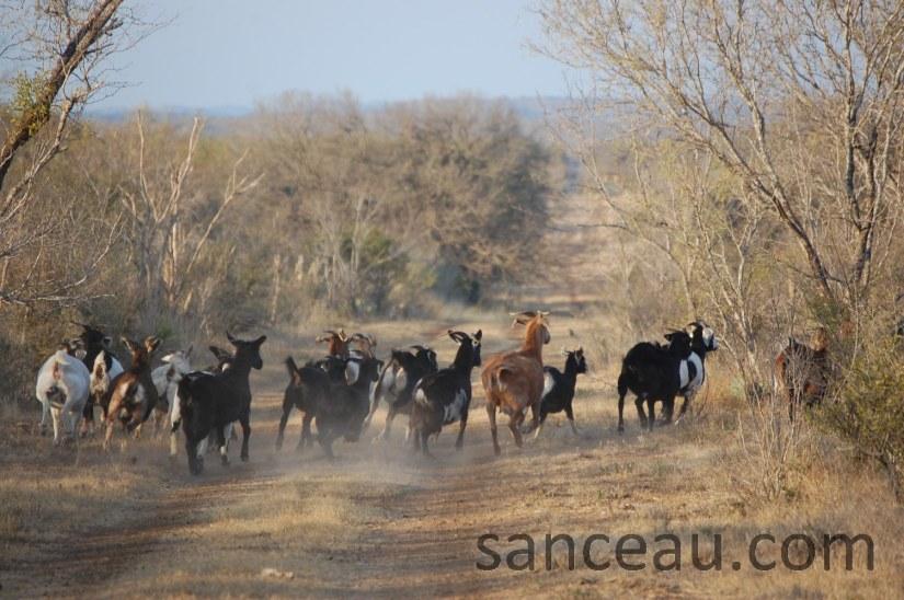 Christmas Ranch 08 142
