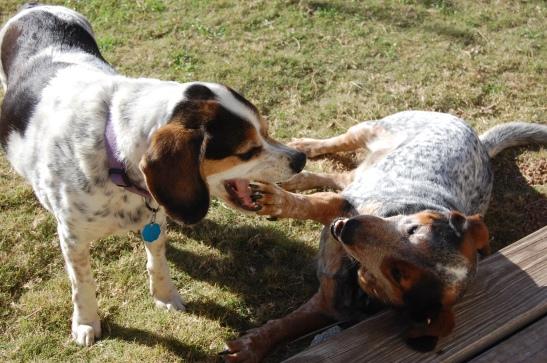 Dorky Dogs 010