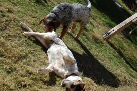 Dorky Dogs 018