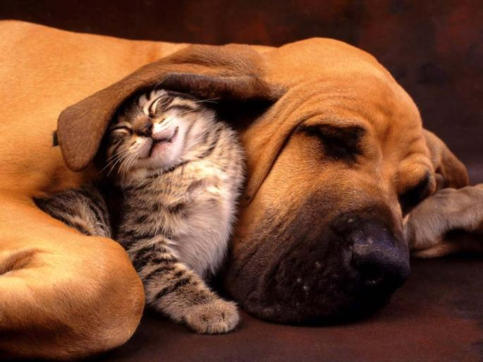 http://versusali.com/cats-vs-dogs/