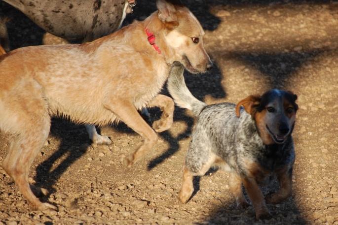 Dog Park 008
