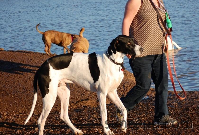 Dog Park 015