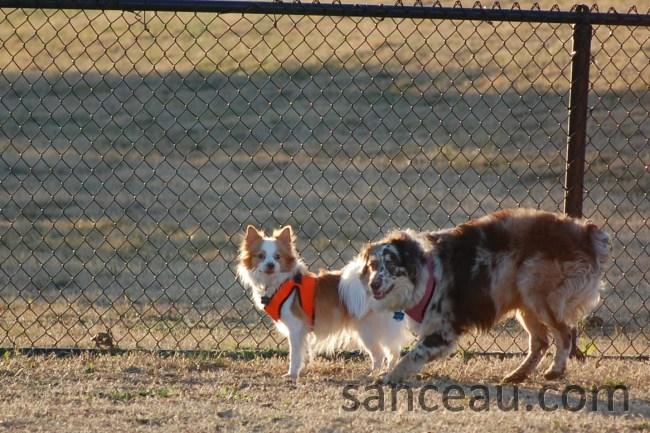 Dog Park 018