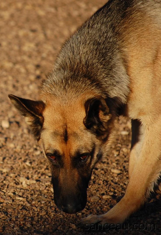 Dog Park 025