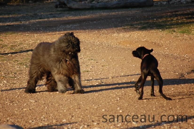 Dog Park 035