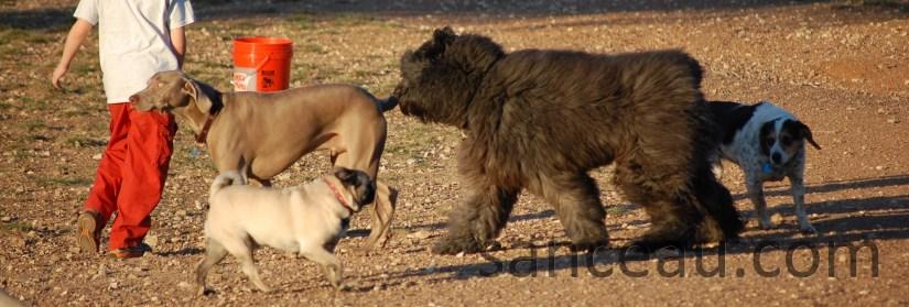 Dog Park 036