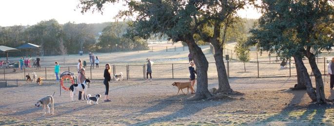 Dog Park 053