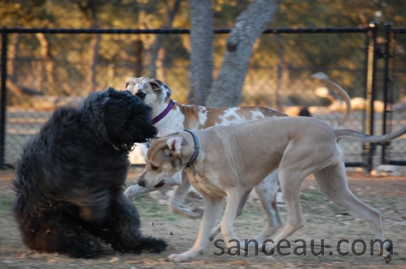 Dog Park 060