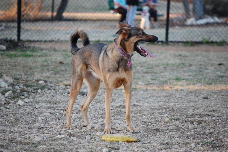 Dog Park 076