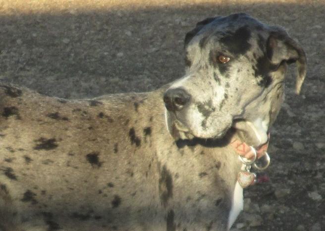 Dog Park Charles 001