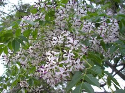 http://forums.gardenweb.com/