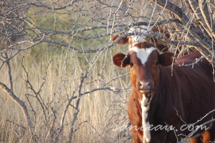 Christmas Ranch 08 153
