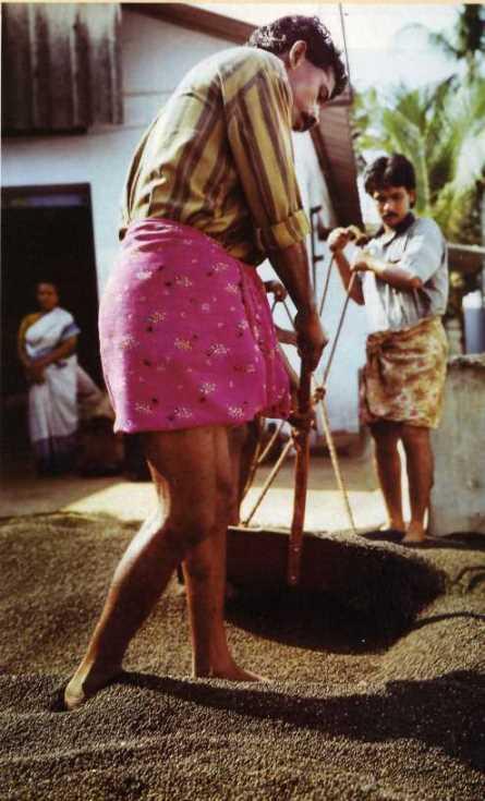 Indian Men Ankle Deep In Peppercorns Wearing Beautiful