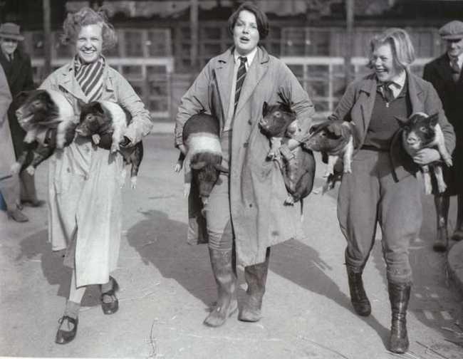 Essex Pig Show in Chelmsford, 1927