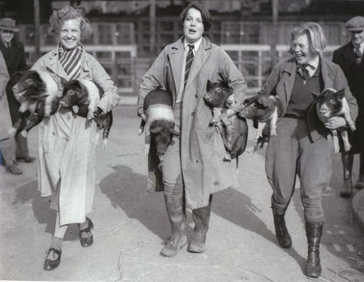 Essex Pig Show in Chelmsford, 1927