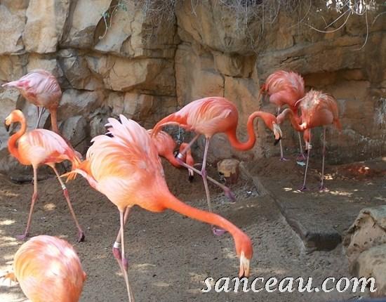 2011-06 Zoo Kodak 004