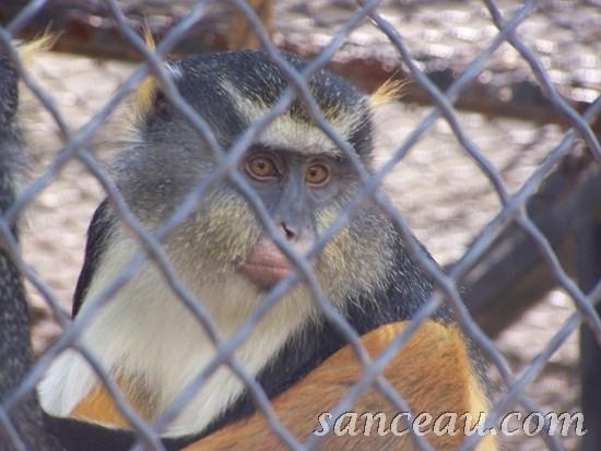 2011-06 Zoo Kodak 013