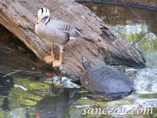 2011-06 Zoo Kodak 069