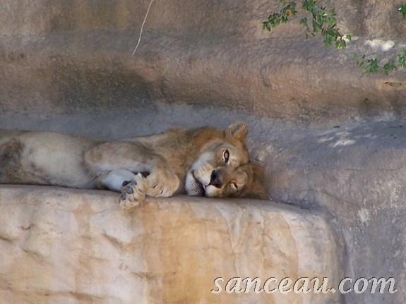 2011-06 Zoo Kodak 080