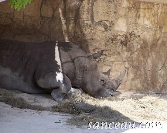 2011-06 Zoo Kodak 094