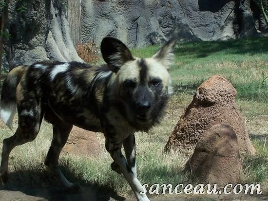 2011-06 Zoo Kodak 101
