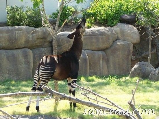 2011-06 Zoo Kodak 104