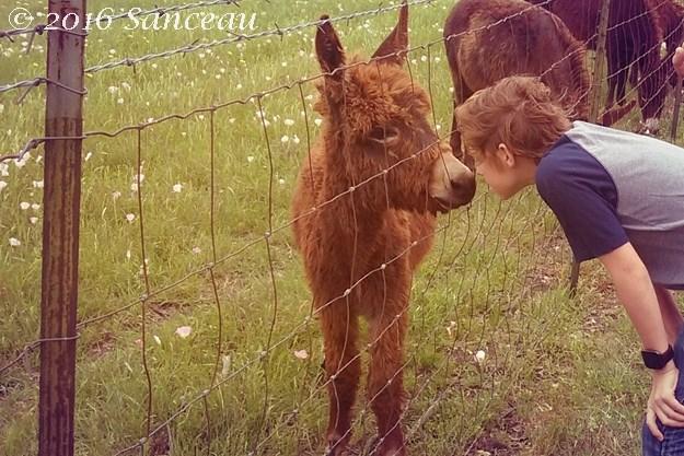 donkeynose