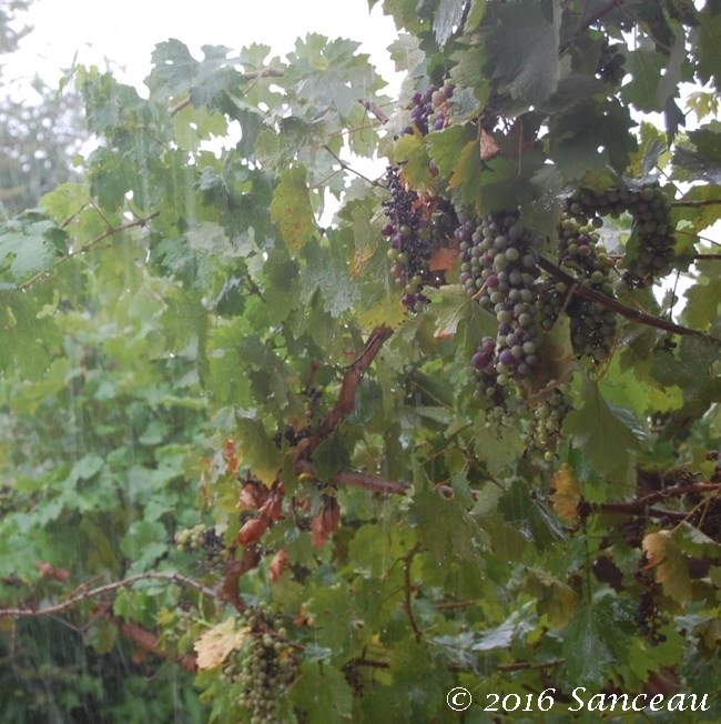 Rain (14)