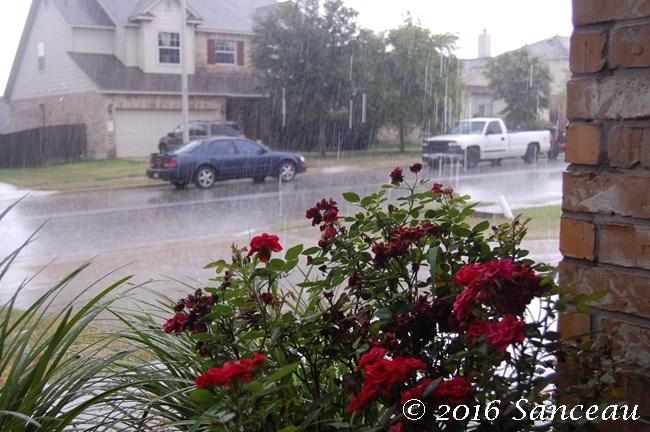 Rain (16)
