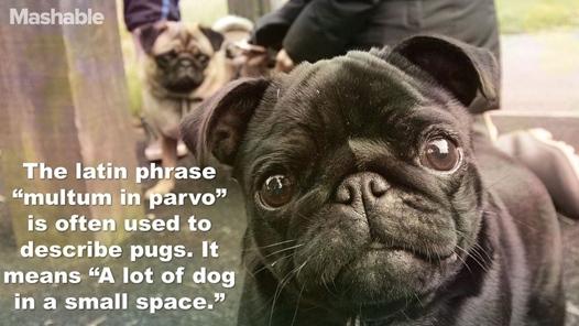 pugspace