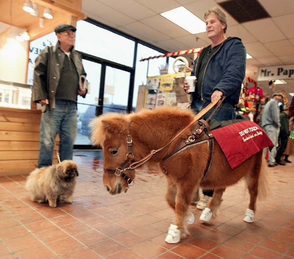 12/14/2002 -- Ellsworth, Maine -- Dan Shaw and his Guide Horse Cuddles make their way through a shopping mall.