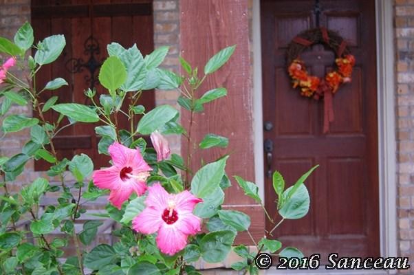 hibiscus-1