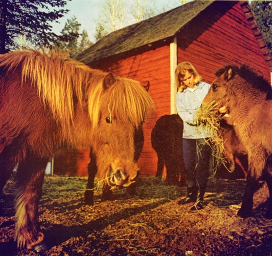 Shaggy Icelandic ponies on Washington Island, Wisconsin, Natl Geo, March '69
