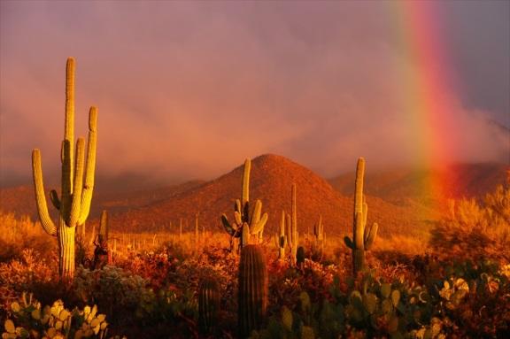 Tucson Today
